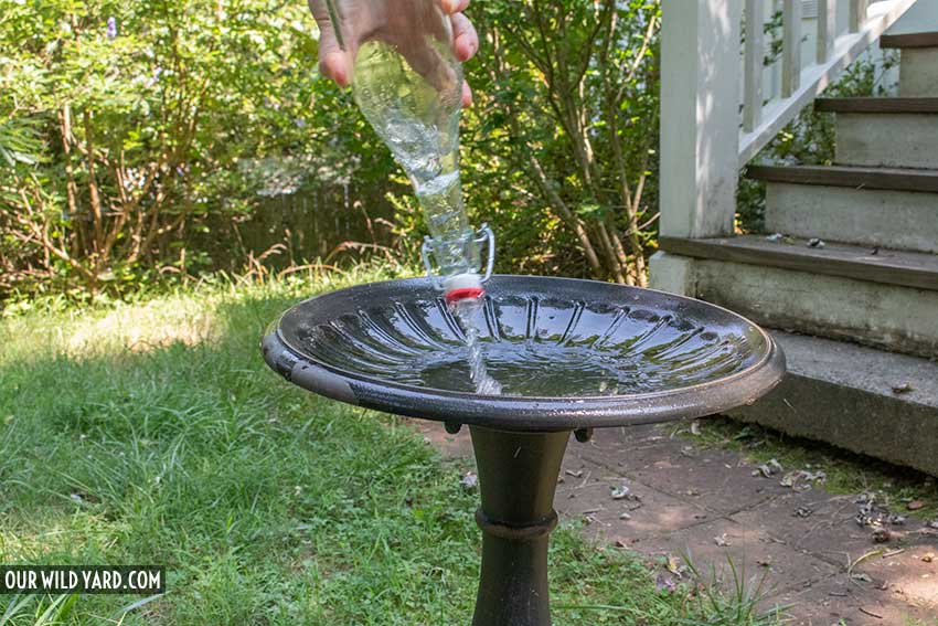 cleaning a bird bath, rinse with fresh water
