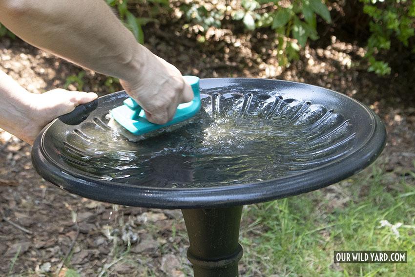how to clean a bird bath