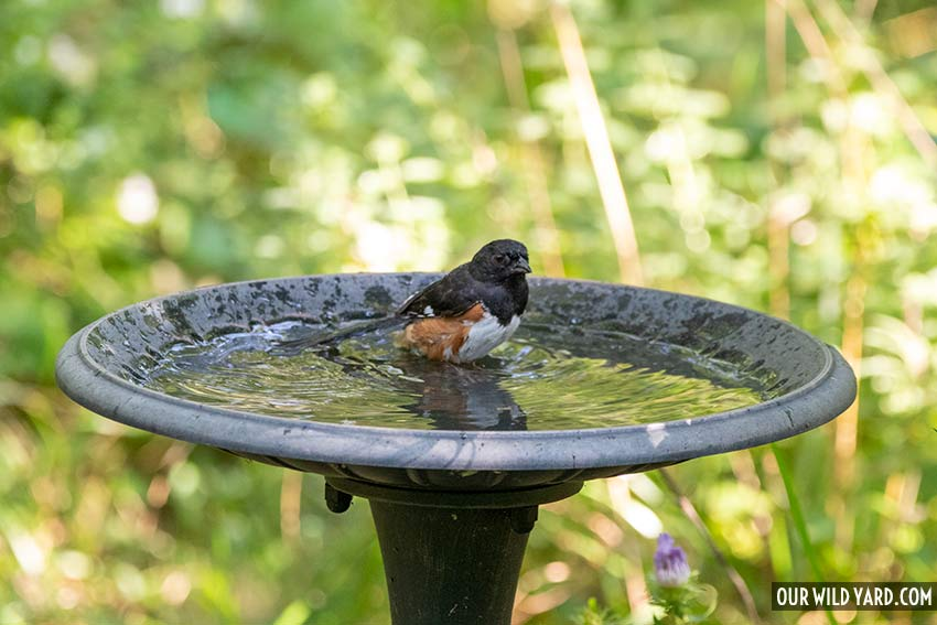 how to clean a bird bath and have happy birds